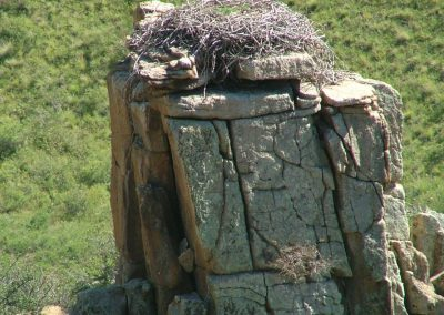 bird nest - hustai national park - mongolia