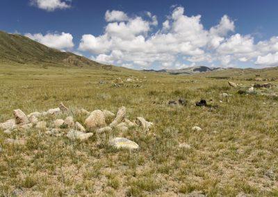 grae - hustai national park - mongolia