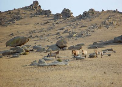 horses rocks - hustai national park - mongolia